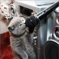 Cat Studio
