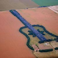 Роща в форме гитары (изображений 2)   Таким оригинальным способом аргентинец Педро Урета выразил свою любовь к скончавшейся жене. Еще в самом начале их совместной жизни у пары появилась идея высадить из деревьев какую–нибудь фигуру на своей плантации